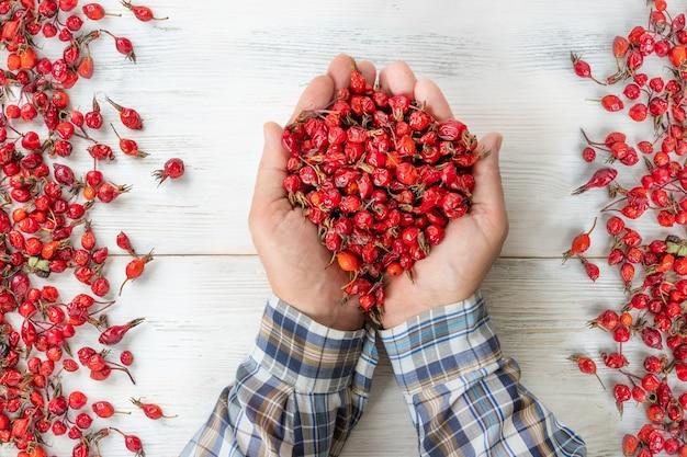 Handen met rozenbottelbessen op een witte houten achtergrond, de vruchten van rode wilde roos.