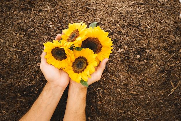 Handen met vier zonnebloemen