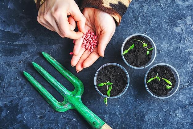 Handen met zaden lente planten