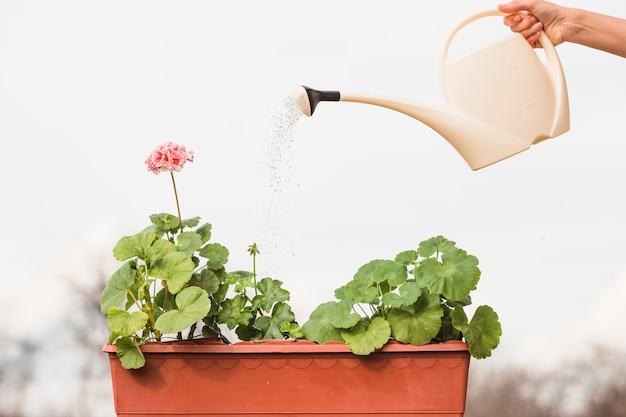 Handen planten