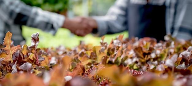 Handen schudden na boer oogst plantaardige biologische salade, sla van hydrocultuur boerderij aan klanten.