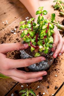 Handen transplanteren huisplanten in potten, close-up verticale foto. sappig zorgconcept. hoge kwaliteit foto