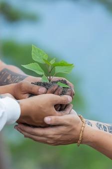 Handen van bomen die zaailingen kweken.