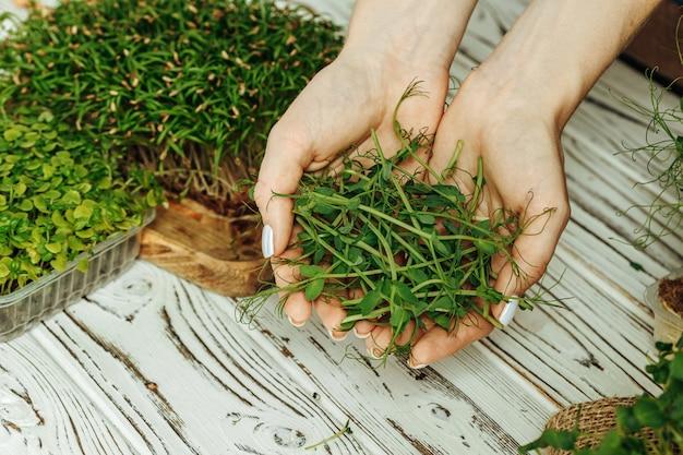 Handen van de dienbladen van een vrouwenholding met micro groen