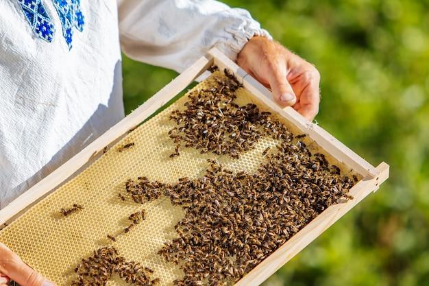 Handen van de mens toont een houten frame met honingraten op de achtergrond van groen gras in de tuin