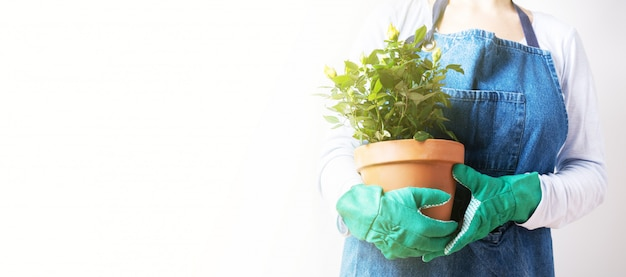 Handen van een jonge vrouw die rozen in de bloempot plant. thuisplanten planten. thuis tuinieren. lange brede banner met kopie ruimte achtergrond