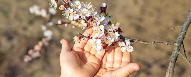 Handen van een kind dat een bloeiende boomtak houdt
