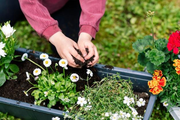 Handen van een klein meisje dat een dienblad met bloemen vult met aarde, bloemen verplant in de lente, voor planten zorgt.
