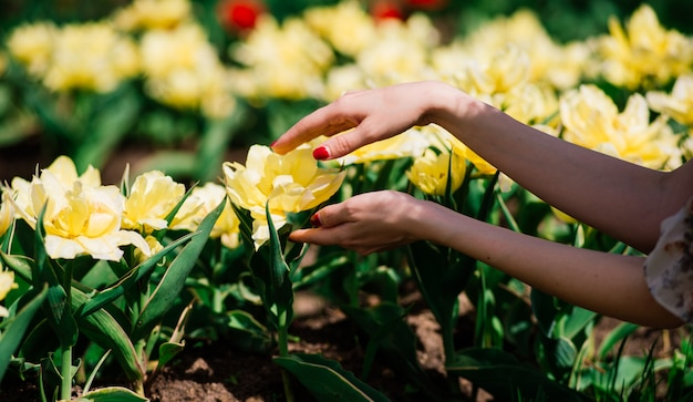Handen van een vrouw met gele bloemen