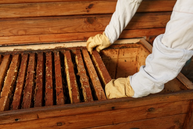 Handen van imker trekt uit de bijenkorf een houten frame met honingraat