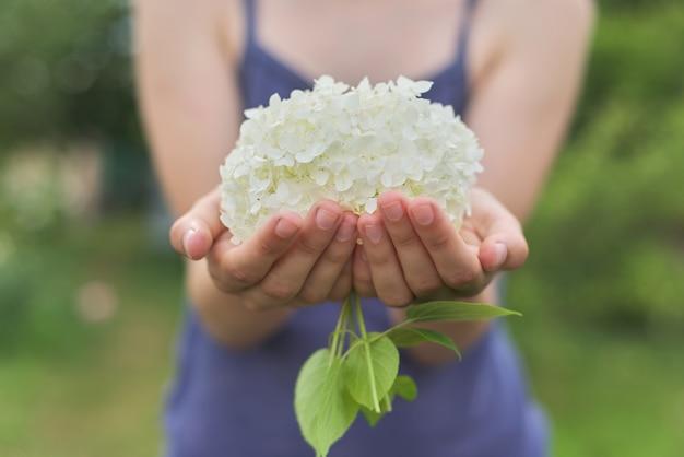 Handen van meisjes die een witte hydrangea hortensiabloem houden.