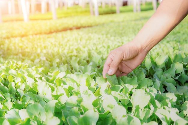 Handen van tuinman en groenten.