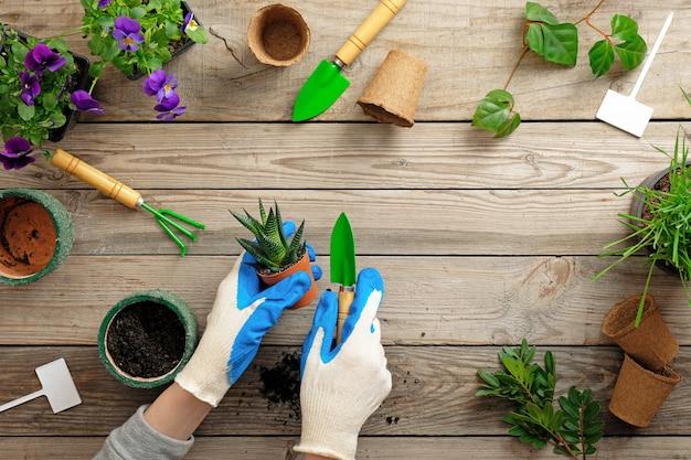 Handen van tuinman in handschoenen die bloem in pot met vuil of grond planten
