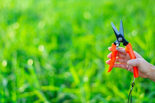 Handen van vrouwelijke tuinman op middelbare leeftijd. - vrouw die met snoeischaar in binnenlandse tuin werkt.