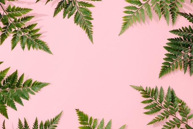 Handgemaakt minimalistisch botanisch interieur, groene tropische bladeren in houten lijsten die op een roze achtergrond hangen