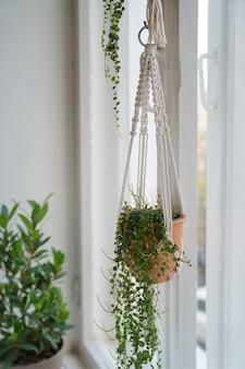 Handgemaakte katoenen macramé plantenhanger voor het raam in de woonkamer