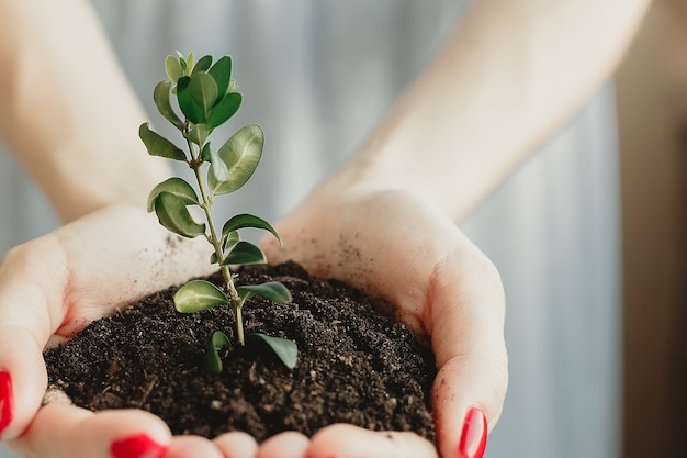 Handvol aarde met jonge plant in de groei
