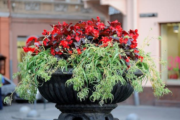 Hangende bloemen bij de ingang van het restaurant
