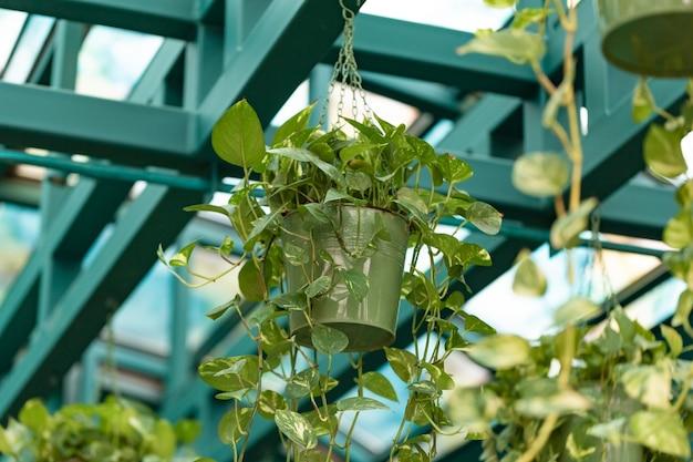 Hangende bloemen in potten, modern interieur