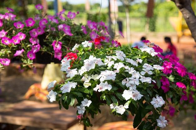 Hangende bloempotten met hek