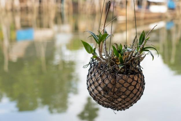 Hangende mobiele plant met drijfhout uit de natuur