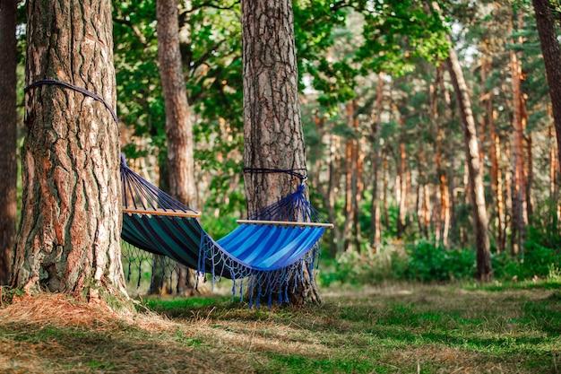 Hangmat in het groene bos. hangmatten op bomen in het bos