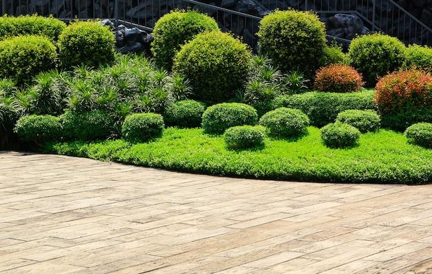 Hardhouten vloeren of cementvloer en plant in tuin