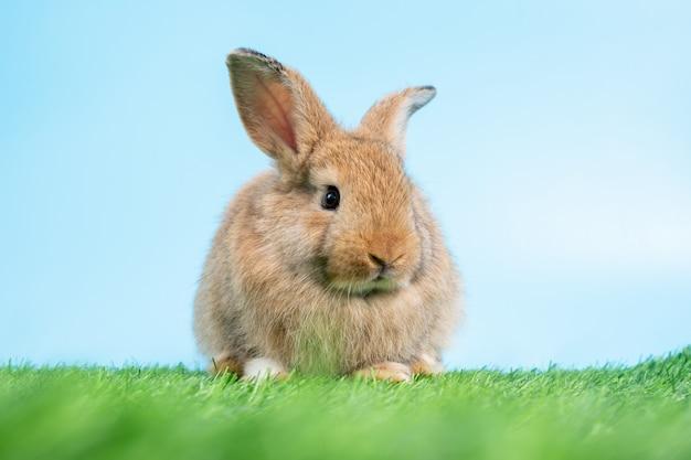 Harige en donzige schattige zwarte konijn staat op twee benen op groen gras
