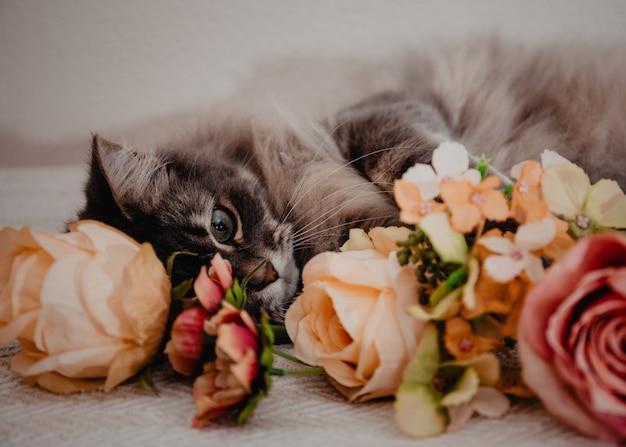 Harige huiskat met grote groene ogen verborgen achter bloemen op een bed.