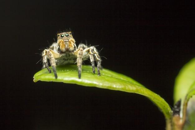 Harige spin zittend op blad