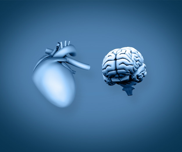 Hart en hersenen