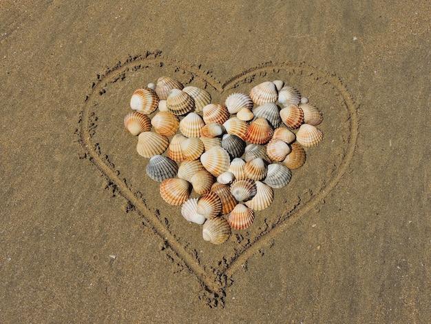 Hart en schelpen op zand