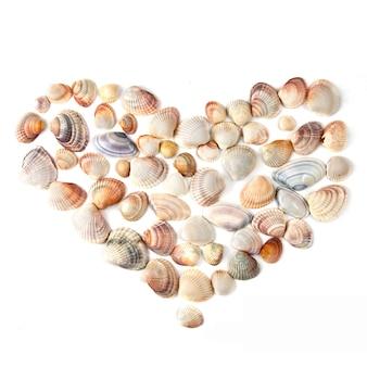 Hart voor valentijnsdag van kleur shells geïsoleerd op wit