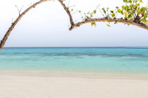 Hart-vormige boom op een strand die het overzees overzien bij koh rok, lanta eiland, krabi, thailand