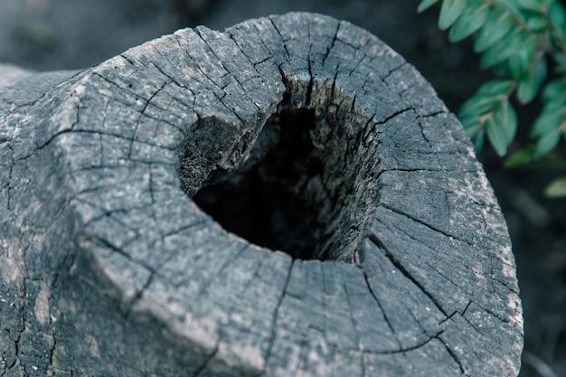 Hartvormig vogelnest in holle stam