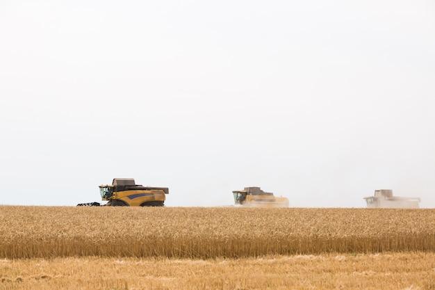 Harvester verzamelt tarwekorrel in het veld.