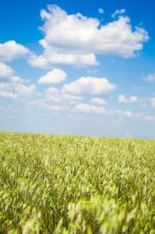 Haverveld met een prachtige lucht dus verbouwt havermout ieders favoriete product een milieuvriendelijk