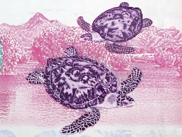 Hawksbill zeeschildpad illustratie van venezolaans geld