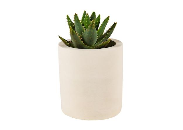 Haworthia sappige natuurlijke tuin kuipplant in ronde betonnen plantenbak pot geïsoleerd op een witte achtergrond
