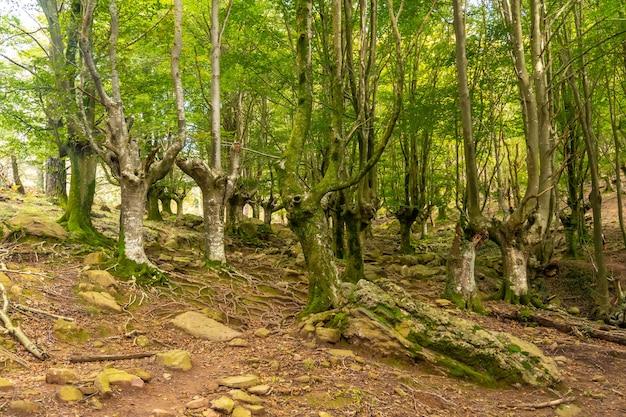 Hayedo op het pad naar de berg adarra in de stad urnieta bij san sebastian, gipuzkoa