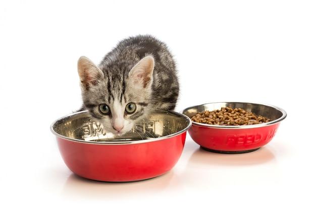 Heerlijk kitten eten
