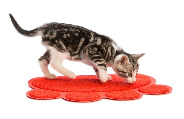 Heerlijk kitten ruikend tapijt