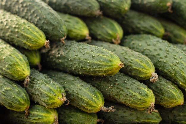 Heerlijke komkommers op de markt.