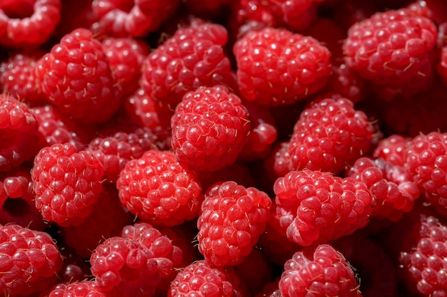 Heerlijke verse en zoete rode frambozen als voedselachtergrond. gezonde voeding biologische voeding. rubus idaeus - natuurlijke antioxidant en vitamine fruitlandbouw.