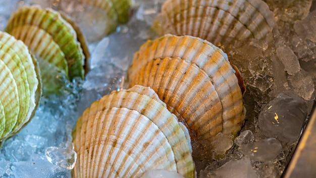 Heerlijke verse tweekleppige schelpdieren