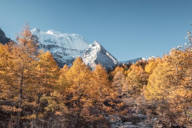 Heilige berg xiannairi in het bos van de de herfstpijnboom bij natuurreservaat yading