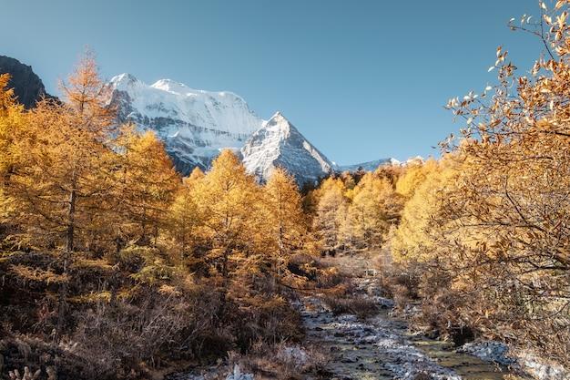 Heilige berg xiannairi met het bos van de de herfstpijnboom