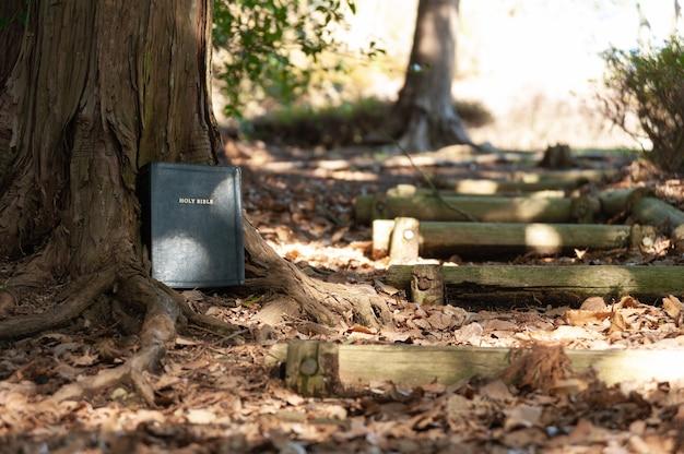 Heilige bijbel buiten op de boomstam naast een houten ladder
