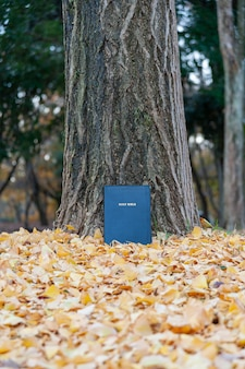 Heilige bijbel op boomstam buiten in de herfst met gele gevallen bladeren. verticaal schot.