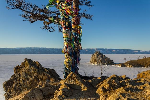 Heilige boom in shamanka-rots
